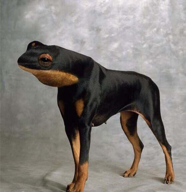 scary lol funny hybrid animals photoshoppes pics images ...