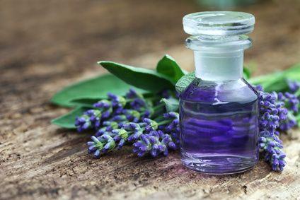 Lavendelöl herstellen: Es gibt zwei Verfahren, mit denen man Lavendelöl selber machen kann: Die heiße und kalte Extraktion. Alles zu Lavendelöl herstellen.