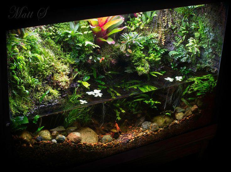 Rainforest lake paludarium