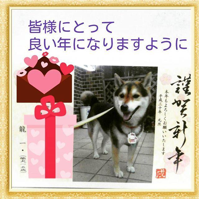 あけましておめでとうございます。 今年もよろしくお願いいたします。 我が家の年賀状。だいぶ若い頃の龍ちゃんの写真にしました😂  #2018年 #戌年 #愛犬 #柴犬 #黒柴 #シニア犬 #15歳 #老犬介護