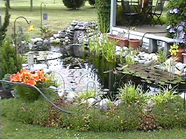 34 best my new backyard pond project images on pinterest for Plants around garden pond