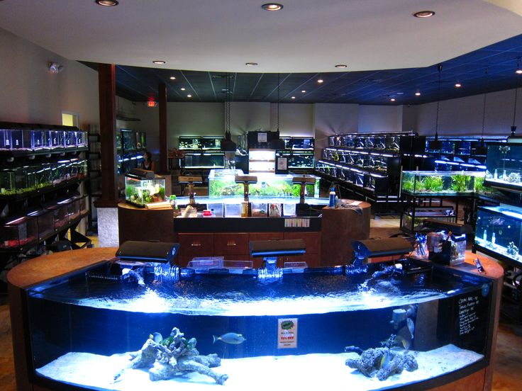 Plan Your Visit To The Houston Aquarium Fish Room Maybe