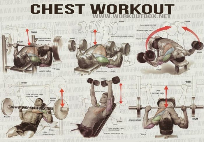 Chest Workout - Healthy Fitness Workout Sixpack Back Upper Body - FITNESS HASHTAG