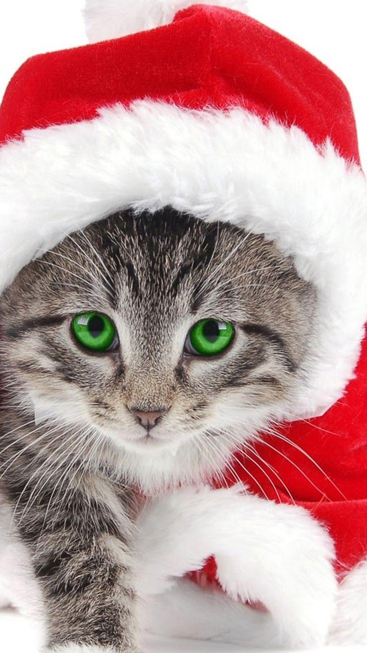 Animal samsung galaxy s5 wallpapers part 4 - Pets At Christmas