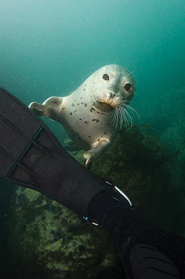 Look how close you can get to seals when scuba diving  wind and waves!
