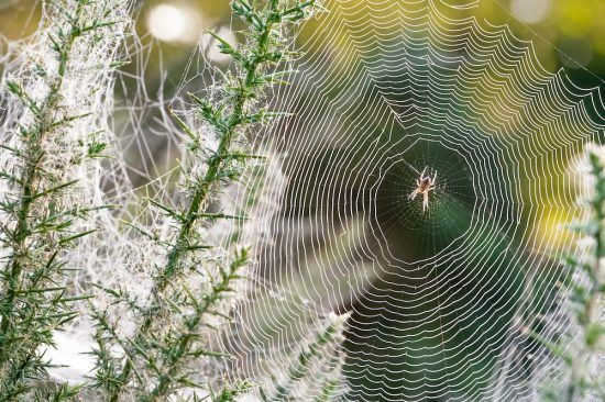 Pour se d barrasser des araign es naturellement il est for Se debarrasser des araignees