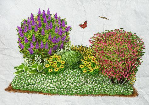 Blühsträucher 2 Eine klassische kleine Vorgartensituation kann durch die Pflanzung eines duftenden Flieders im Zusammenspiel mit einer roten Zier-Johannisbeere zu einem echten Hingucker werden. Das Beet wird mittig mit den immergrünen insektenliebenden Buxus bepflanzt. Pflegearmut ist durch den gelben Fünffingerstrauch im Hintergrund und das weißblütige schattenverträgliche Immergrün im Vordergrund garantiert.