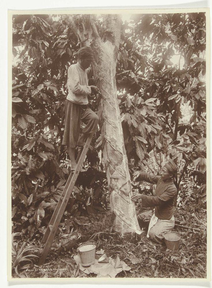 Rubbertappers, voormalig Nederlands-Indië, O. Kurkdjian, ca. 1908 - ca. 1911