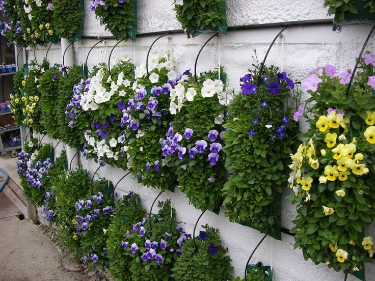 116 Best Plants On Bags Images On Pinterest Geraniums 400 x 300