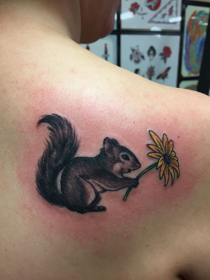 DONE - squirrel tattoo My adorable squirrel holding a little sunflower.  Tim Beck at Freedom Ink