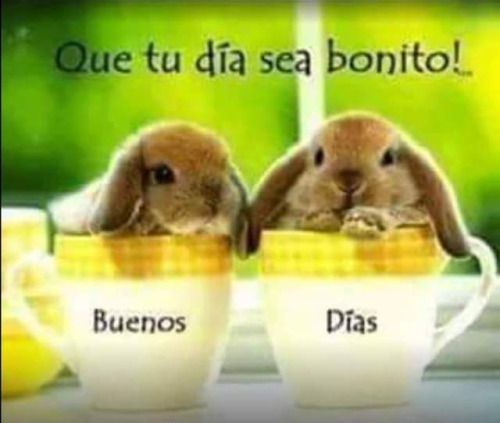 Buenos Dias  http://enviarpostales.net/imagenes/buenos-dias-639/ Saludos de Buenos Días Mensaje Positivo Buenos Días Para Ti Buenos Dias