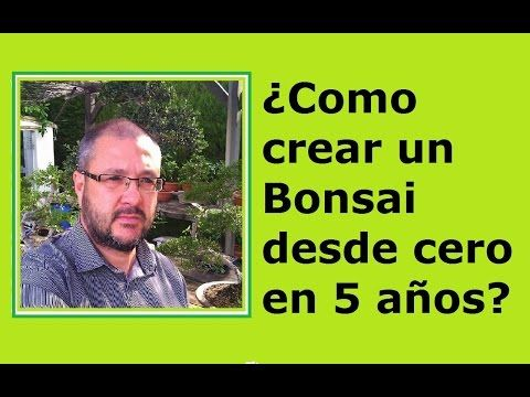 COMO HACER UN BONSAI DESDE CERO - EXPLICACION PARA CREAR UN BONSAI - YouTube