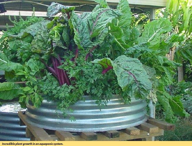 18 best how to grow with grodan images on pinterest for Hydroponic grow bed
