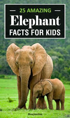 25 Amazing Elephant Facts For Kids