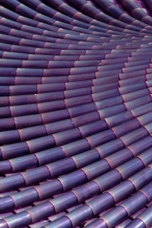 Purple bamboo. It's so beautiful.