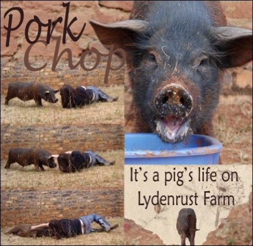 Photo Gallery at Lydenrust Guest Farm and Horse Trails