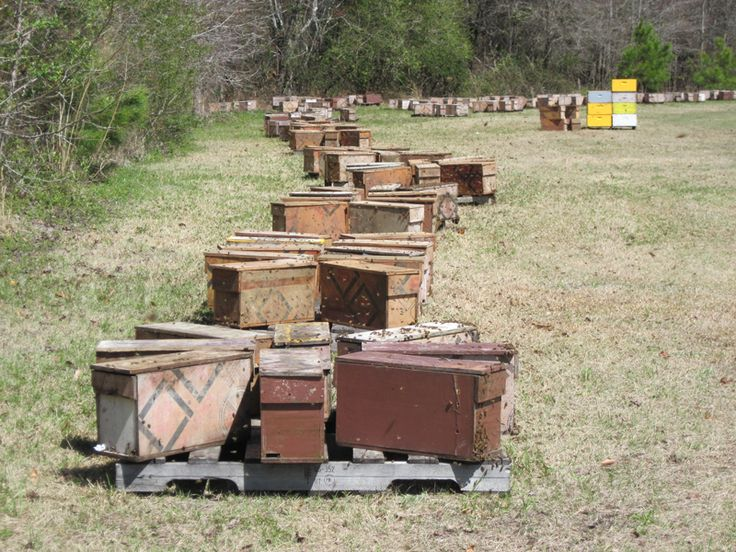 Honey Bees for Sale in Central New York