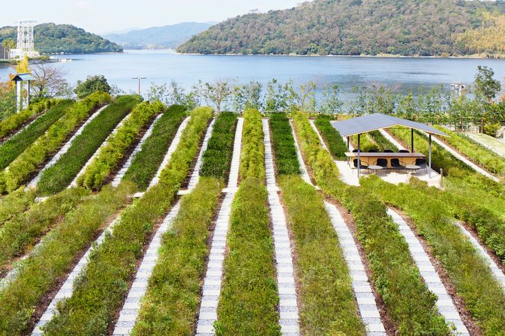 KAI Enshu – Green tea plantation