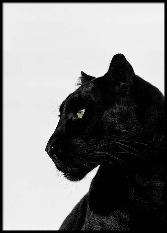 Black panther Poster in de groep Posters / Afmetingen / 50x70cm bij Desenio AB (2273)