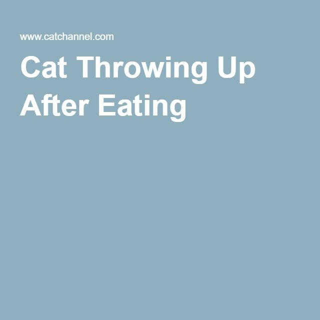Cat Throwing Up After Eating