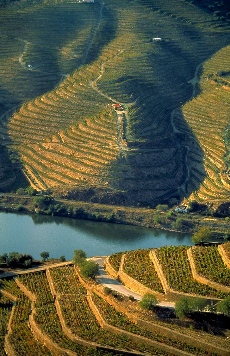 Douro vineyards - Portugal