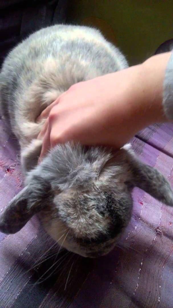 Massage du lapin 4 : la nuque - Vidéo Association Marguerite & Cie