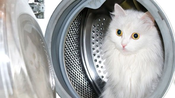 How to clean dingy whites in a front loading washing for Dingy white t shirts