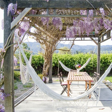 patio with wisteria