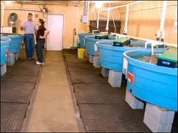 Catfish farming can be started in a 55 gallon food grade quality barrel.