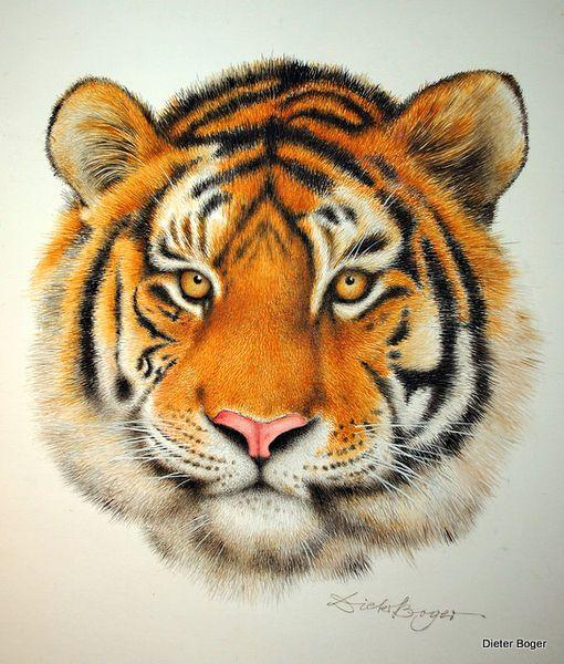 Sibirischer Tiger - Dieter Boger