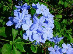 Oltre 25 fantastiche idee su fiori da balcone su pinterest for Arbusti sempreverdi da giardino