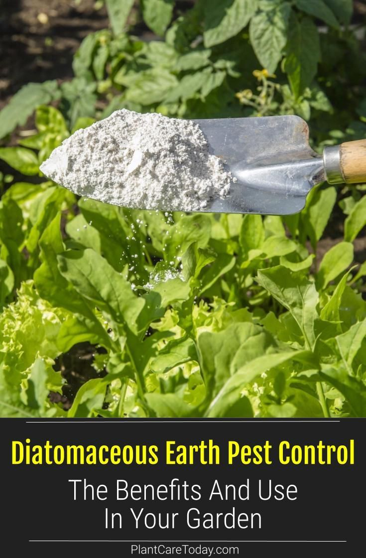 Diatomaceous Earth Pest Control Its Benefits And How To