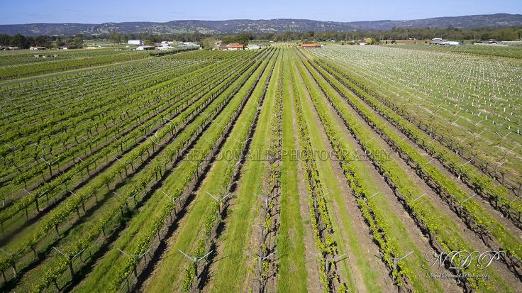 Aerial drone image of a Vineyard in the Swan Valley, Western Australia