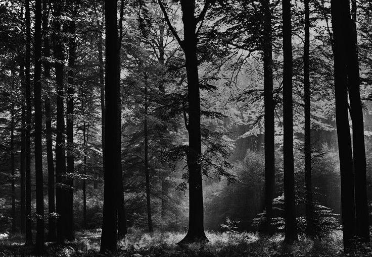Fototapete Wald Schwarz Weiß Avalon 366 x 254cm (Art.115)