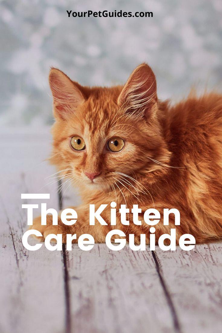 8 Tips For New Kitten Owners In 2020 Kitten Care Kitten Health Kitten