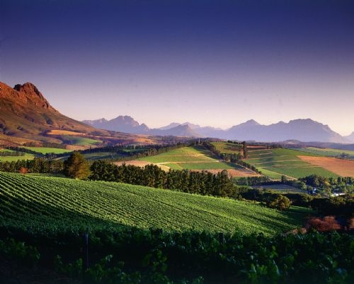 Warwick Estate Vineyards in Stellenbosch South Africa - breathtaking scenery