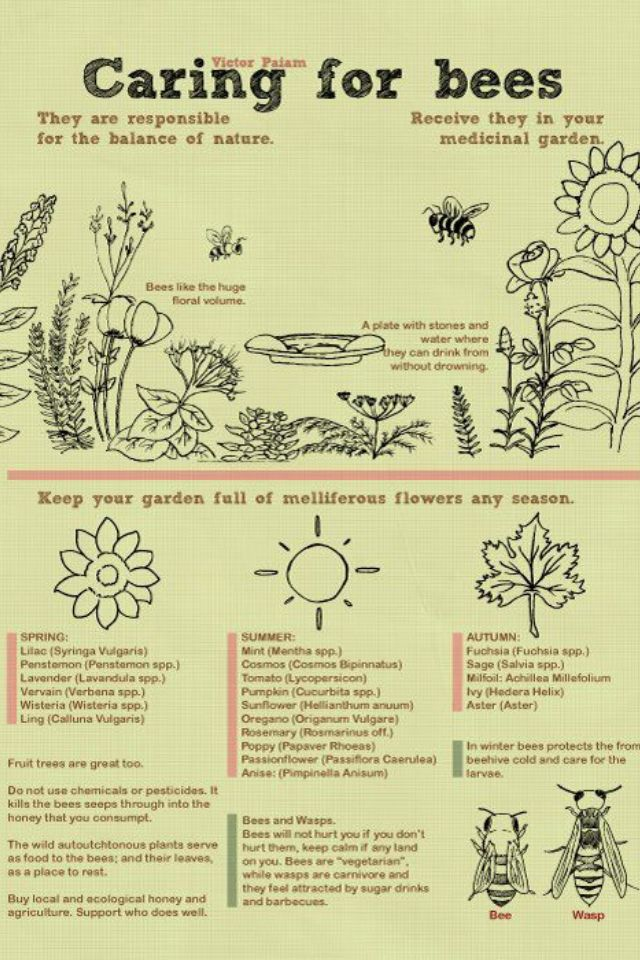 Encouraging bees to your garden is always a good idea! This care sheet looks good:) Can you read it?