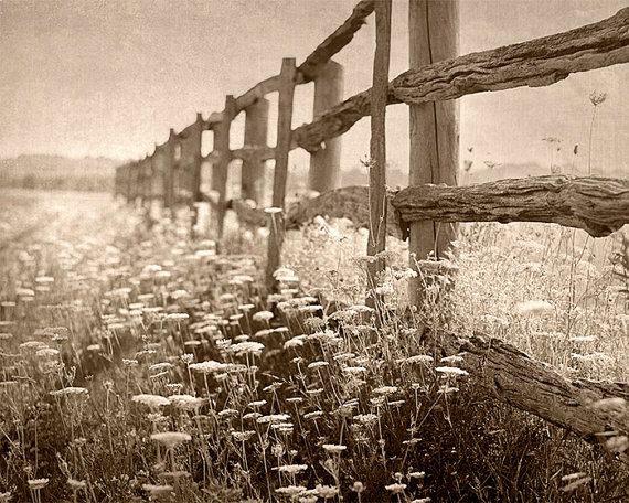 Country Photography Rustic Wall Decor by PureNaturePhotos on Etsy