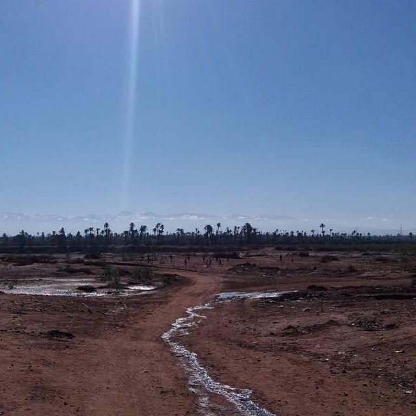 A layer of dust...a layer of palm trees...a layer of mountains...sprinkled with several rays of sun...  www.morocco-objectif.com https://www.youtube.com/watch?v=L5YLOQeiIeM  #moroccoobjectif #palmtrees #palmery #palmeraie #marrakechpalmeraie #quadbike #atv #onedaytrip #atlasmountains #oasis #desert #marrakech #marrakesh #redcity #ochrecity #travel #travelphotography #morocco #maroc #marruecos #marokko #marocco