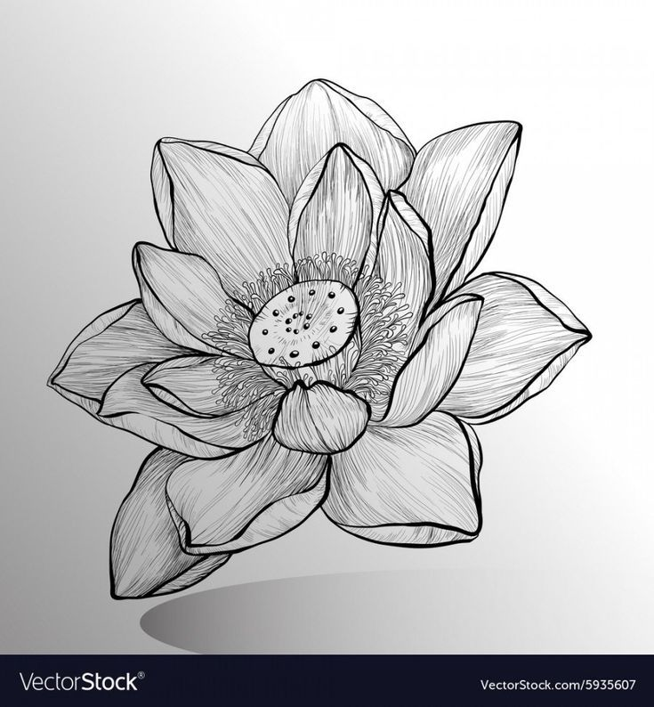 12 Advice That You Must Listen Before Embarking On Lotus Flower Sketch Lotus F Easy Flowers Flower Sketches Flower Drawing Design Lotus Flower Drawing