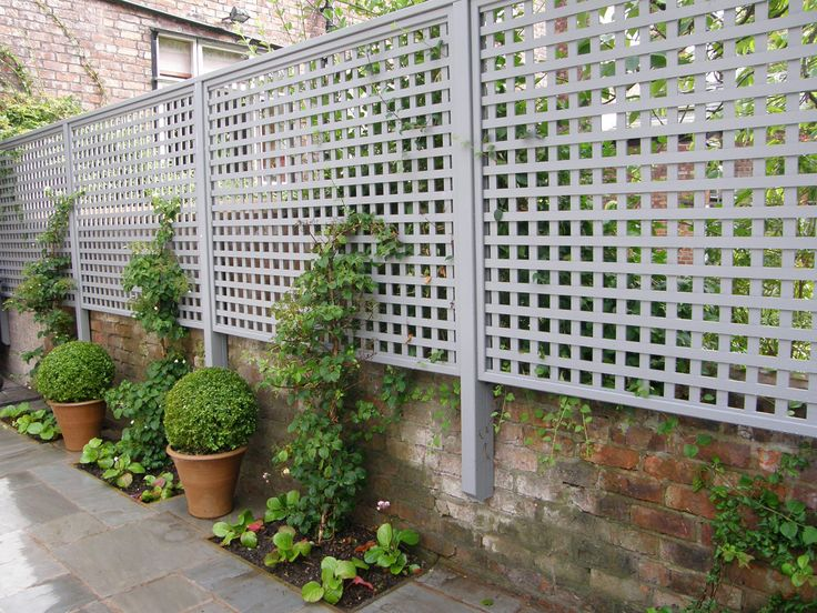 Fixing trellis to the dwarf wall - perfect for adding privacy and greenery with climbing flowers!