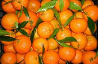 Польза мандаринов для организма