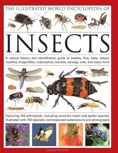 The Illustrated World Encyclopedia of Insects: A natural history and identification guide to beetles, flies, bees wasps, springtails, mayflies, ... crickets, bugs, grasshoppers, fleas, spide/Martin Walters