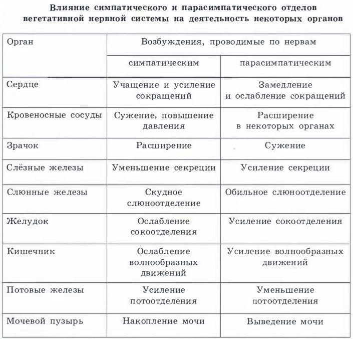 симпатическая и парасимпатическая нервная система таблица: 14 тыс изображений найдено в Яндекс.Картинках