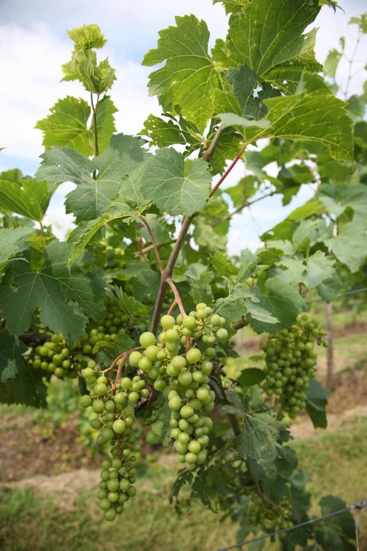 45 Best Illinois Wine Amp Wineries Images On Pinterest