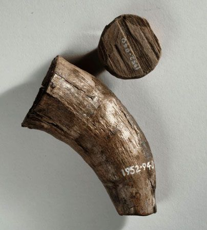 This horn container with wooden plug was discovered along with various objects on a man's body found at Gunnister in Northmavine in Shetland in the late 17th century. The container may have been used for holding ink.