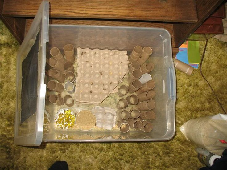 Easy inexpensive cricket setup.