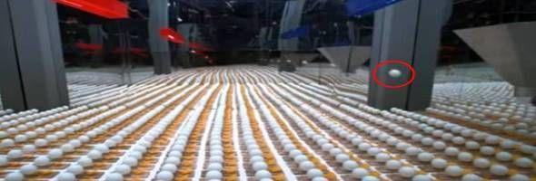 Duizenden Muizenvallen En Pingpongballen Creëren Samen Het Beste Effect Dat Je Vandaag Zult Zien.