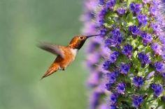 Atrae pájaros y mariposas al jardín: Atrae zumbadores al jardín