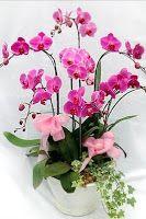 Rangkaian Bunga Favorit Indonesia Ada beberapa rangkaian bunga favorit di Indonesia yang secara umum sering dipesan kepada toko bunga dan fl...